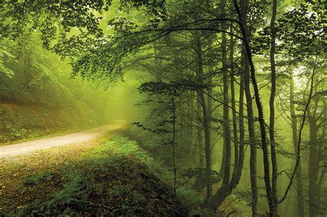 Descubre todo sobre los Bosques, uno de los Ecosistemas de ...