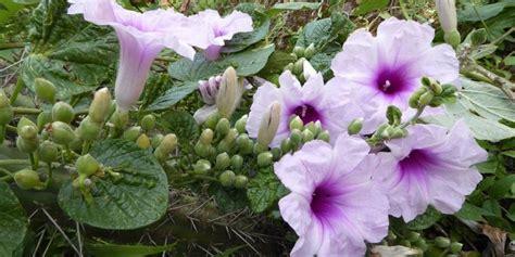 Descubren más de 120 nuevas especies de plantas en 2018 ...