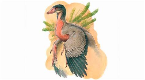 Descubren un pequeño dinosaurio carnívoro con alas que ...