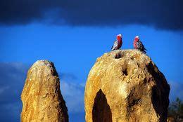 Desierto de los Pináculos   EcuRed