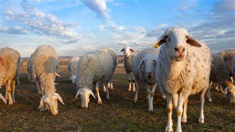 Destinamos 5,4 millones a la agricultura y la ganadería ...