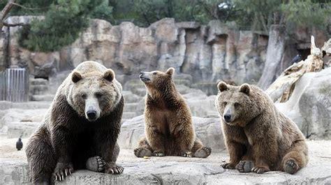 Detenidos dos empleados del zoo de Madrid por estafar un ...