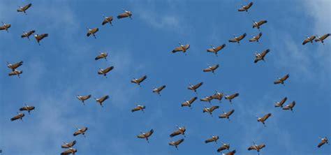 Día Internacional de las Aves migratorias   Colegio Santa ...