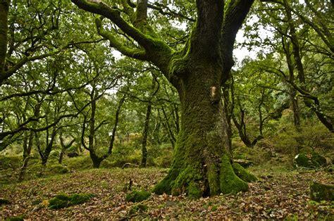Día Internacional de los Bosques 2016 | Comunidad ISM