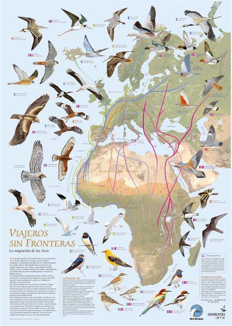 Día Mundial de las Aves Migratorias: Recursos y ...