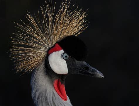 Día Mundial de las Aves Migratorias: Un nuevo informe ...