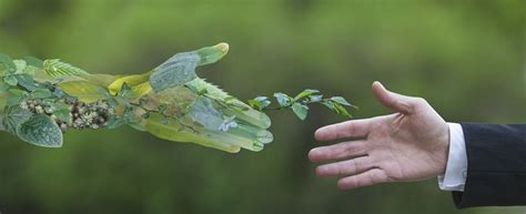 Día Mundial del Medio Ambiente: qué es y por qué se celebra