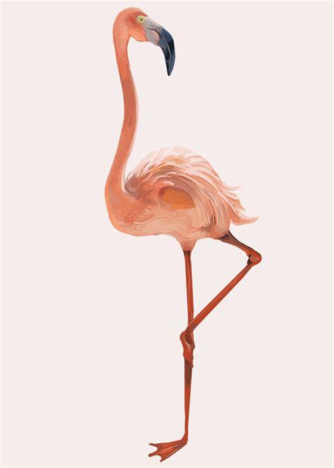 Dibujado a mano flamenco rosa | Vector Gratis