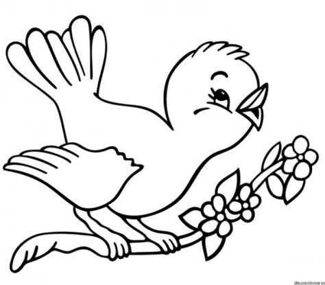 Dibujos de pájaros para imprimir y pintar | Colorear imágenes