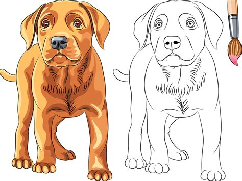Dibujos de perros para colorear   Todo Razas De Perros