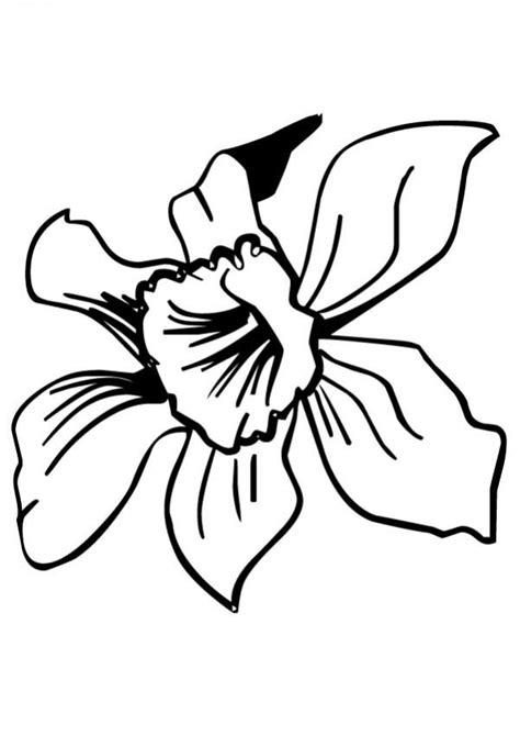 Dibujos para pintar flores | Orquídea | Patrones para ...