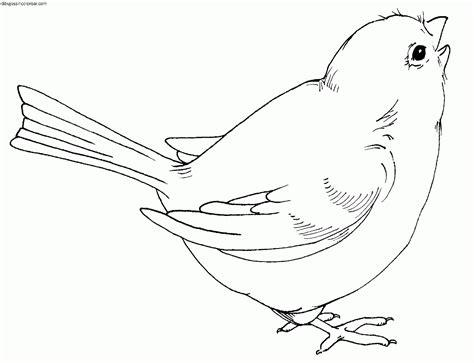 Dibujos Sin Colorear: Dibujos de Pájaros para Colorear