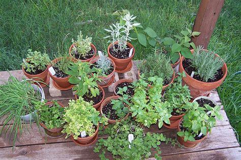 Dica: Plantas aromáticas | Portal do Jardim.com