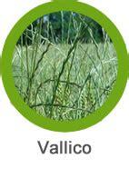 DICLOFOP 36%   Envase 5 Litros   Herbicida desde 12,23 ...