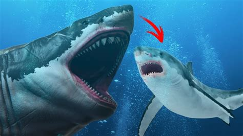 Did the Megalodon Turn Into the Great White?   YouTube