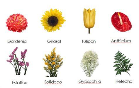 Diferentes Tipos De Flores Y Sus Nombres  1  | Esther de ...
