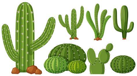 Diferentes tipos de plantas de cactus.   Descargue ...