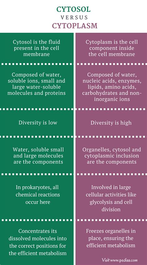 Difference Between Cytosol and Cytoplasm | Composition ...