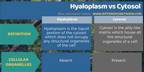 Difference Between Hyaloplasm and Cytosol | Compare the ...