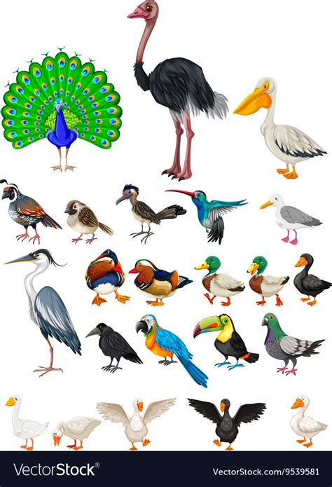 Different kind of wild birds Royalty Free Vector Image