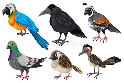 Different Kind Of Wild Birds Stock Illustration ...