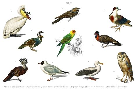 Different types of birds  PSD  ~ Animal Photos ~ Creative ...