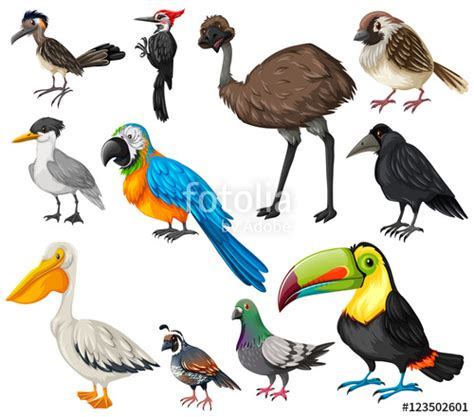 Different types of wild birds  Stock image and royalty ...