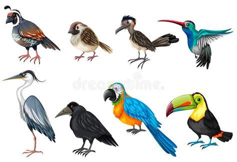 Different Types Of Wild Birds Stock Vector   Illustration ...