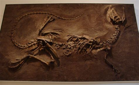 Dilophosaurus | The Dinosaur Stop