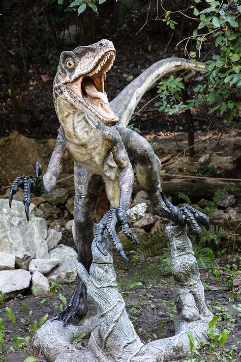 Dino Park Velociraptor Image   ID: 309011   Image Abyss