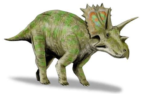 Dinosaur   Anchiceratops Information for Kids