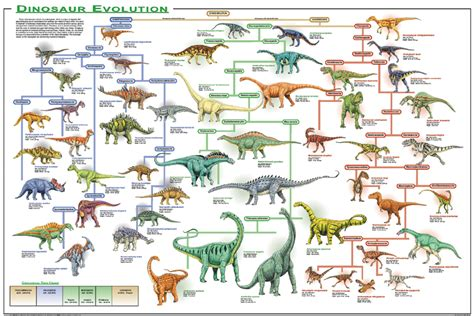 Dinosaur Evolution educational poster