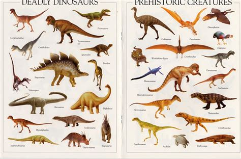 Dinosaur Pictures   Kids Search