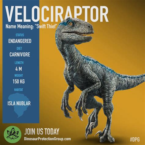 Dinosaur Protection Group on Twitter:  We believe Blue is ...