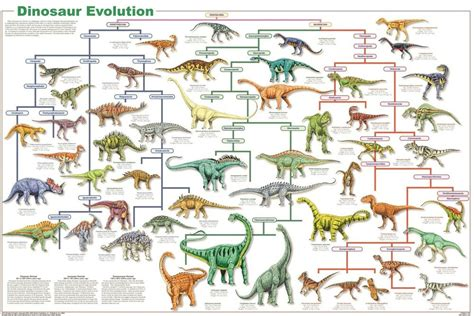 DINOSAUR SPECIES EVOLUTION POSTER  61x91cm  EDUCATIONAL ...