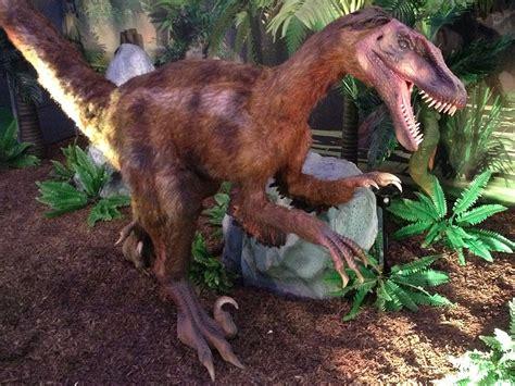 Dinosaur   Velociraptor Information for Kids