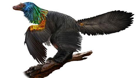 Dinosaurio arcoíris, una nueva especie descubierta en ...