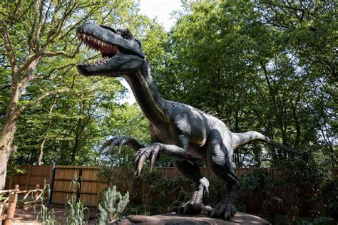 dinosaurio carnívoro | stock de fotos gratis | micromoth ...