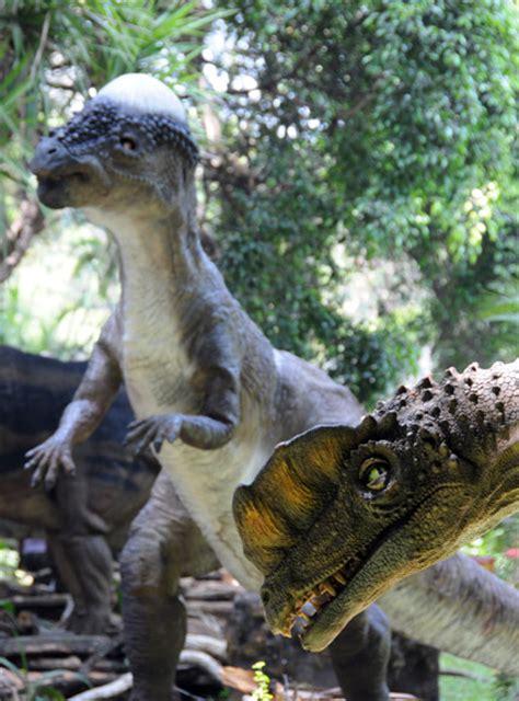 Dinosaurios en La Habana  + Video    Cubadebate