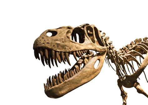 Dinosaurios en Madrid   Hsm Madrid