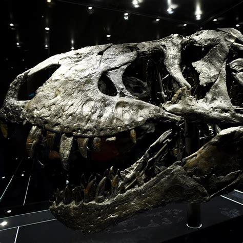 Dinosaurios: Noticias, fotos y nuevos fósiles