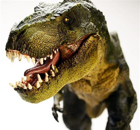 Dinosaurios   SurySur