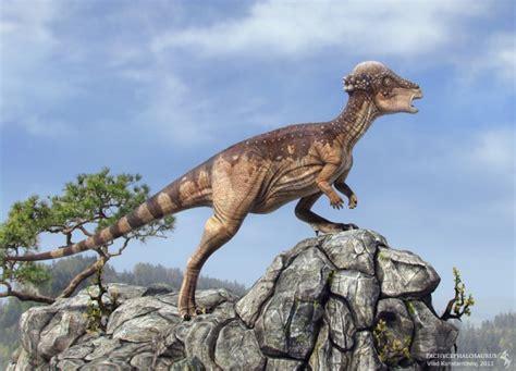 Dinossauros: Paquicefalossauro