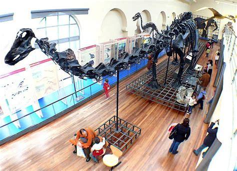 Diplodocus Skeleton   Fossils & Bones   Dinosaur Pictures ...