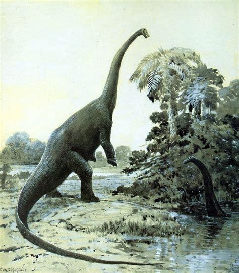 Diplodocus   Wikipedia