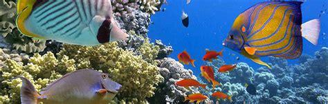 Discover Shreveport Aquarium   The Smart.Market Blog