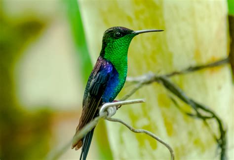 Discover the World s Most Beautiful Exotic Birds ...