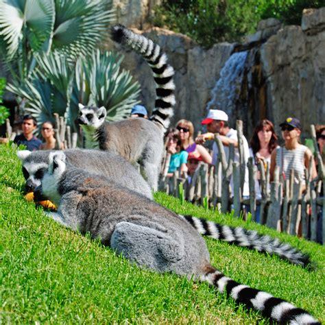 Diseño y construcción Zoológico   Amusement Logic