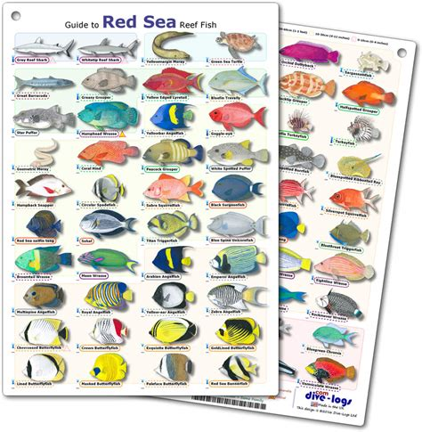 DiveLogs   Red Sea Reef Fish ID Card.