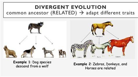 Divergent Evolution | Evolution, Divergent, Convergent ...